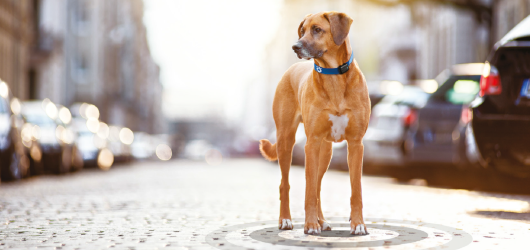 Tractive offers high-quality pet tracking and activity monitoring worldwide