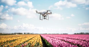 Drone flying over a field of Tulips